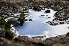 Common Pool (Kindallas) Tags: sun plant water pool rain reflex spring floor t5 250mm