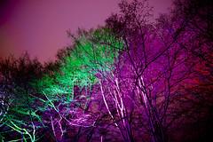 discoloured (christophhornung142) Tags: red green rot colors yellow night licht purple nacht sony illumination gelb blau farbe bume mannheim violett luisenpark langebelichtung strucher winterlichter sonyalpha6000 stimmunglichtknstler