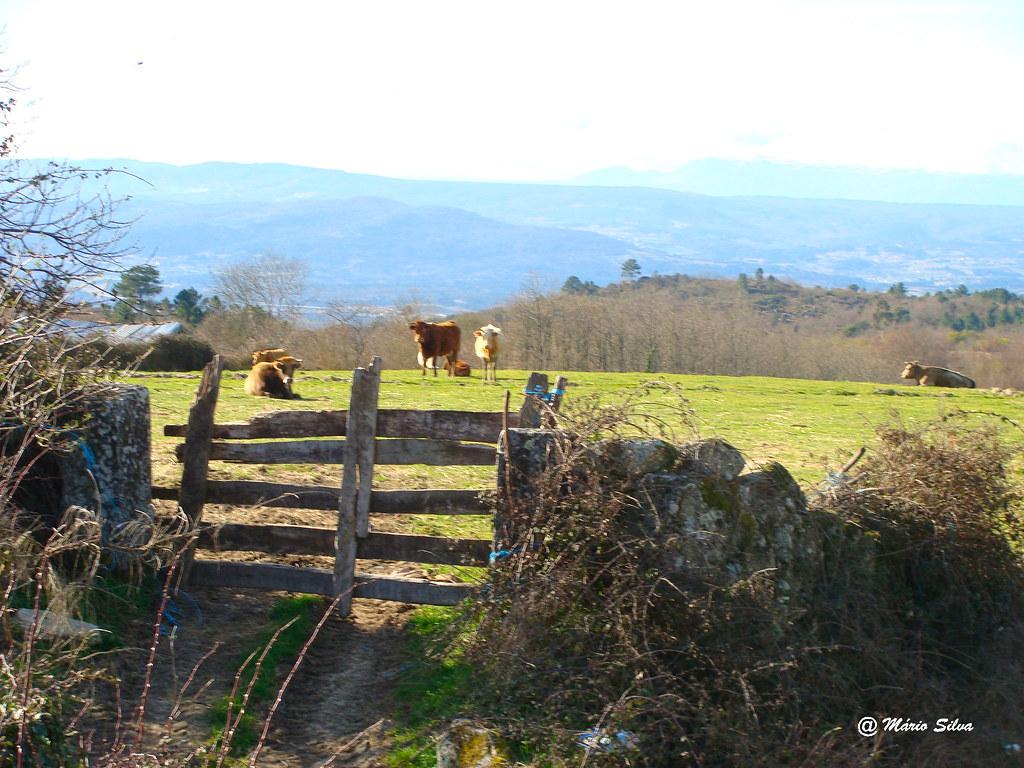 Águas Frias (Chaves) - ... a cancela ... o o gado no pasto ...