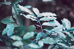 Flora in blue (Andrew Mishenko) Tags: analog lomography turquoise chrome 100 canonae1program filmphotography filmisnotdead