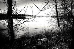 "The river ""Dam"" (vinnie saxon) Tags: trees blackandwhite monochrome river landscape fuji dam fujifilm x100s"