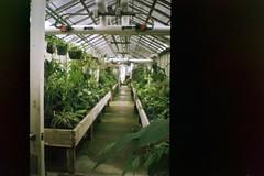 green biology / (luustra) Tags: california camera film toy lomography sacramento