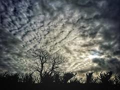 #sky #skyporn #clouds #dark #sun #trees #nature #cielo #nubes #oscuro #sol #arboles #naturaleza #picoftheday #fotodeldia (lunatica_89) Tags: trees sky naturaleza sun sol nature clouds dark arboles cielo nubes oscuro picoftheday skyporn fotodeldia