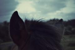 B. (DesiresOfTheSky) Tags: winter horse nature animals spain day