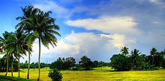Tourism Kumarakom kerala (Mobile/WhatsApp:00919495509009) Tags: