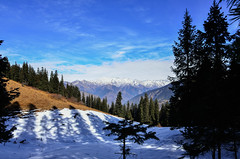 Only if you have been in the deepest valley can you ever know how magnificent it is to be on the highest mountain (_Amritash_) Tags: travel india snow mountains trek landscape treesilhouette landscapes shadows meadow himachal himalayas snowcappedmountains incredibleindia himalayanlandscape incrediblehimalayas incrediblehimachal lambhri lambhrimeadow
