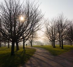 72 Shadows (SamKirk9) Tags: trees shadow shadows morningsun brockley hillyfields 72shadows 116picturesin2016