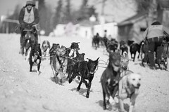 """Alaska - The Fur Rendezvous winter festival, Fur Rondy or """"Rondy"""" (Feddal Nora) Tags: dog dogs sled world championship races sleddog snow race rondy furrendezvous alaska anchorage canon70200f28lll canon70200 70mm200mm canon70200f28isnora feddal canon6d canon"""