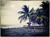 Coconut Trees in El Salvador #0257 (pbeens) Tags: crossprocessing elsalvador d30 canond30 bleachbypass lalibertad 201603 colorefexpro4 filmefexvintage