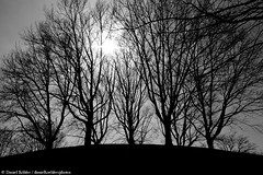 The Hill (danielkoehlersphotos) Tags: vienna wien trees light shadow blackandwhite bw monochrome austria sterreich outdoor hill pflanze bume baum hgel einfarbig danielkhler danielkoehlersphotos