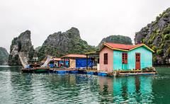 Floating Fishing Village, Ha Long Bay (philhaber) Tags: ocean mountain reflection net water island bay boat fishing southeastasia village vietnam karst halongbay