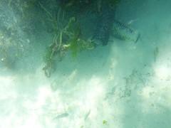 Occy pots (Figgles1) Tags: beach snorkel south snorkeling pot pots octopus fremantle groyne southbeach fsc occy southfremantle p1020070 fremantlesailingclub