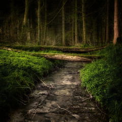 Woodland Stream (aveyardphotography) Tags: bridge trees tree green nature water woodland stream yorkshire north fallen percy wharram forset