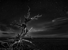 Endings (Greg Adams Photography) Tags: travel sky blackandwhite bw tree heron composite night clouds dark stars dead death nest bare branches wilderness southerncalifornia saltonsea nests hhsc2000