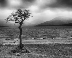 Milarrochy Bay (ginga ninga) Tags: bay scotland dramatic loch lomond milarrochy