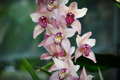 Orchids I (Photato Jonez) Tags: alex nature yellow gardens botanical dc washington nikon day purple botany d3300