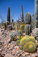 IMG_2962.jpg (ashleyrm) Tags: travel arizona museum sonora desert tucson tucsonarizona