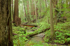 Forgotten Creek (Redwood Reverence) Tags: california park trees river humboldt big stream state redwoods vreek