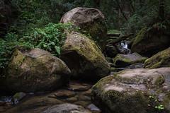 Boulders, Waddell Creek (zh3nya) Tags: fern green nature water rock stone creek forest river dark flow moss woods rocks stream gloomy atmosphere rapids boulders rush d750 geography lush bigbasin slabs dense skylinetothesea bigbasinstatepark sigma35mmf14