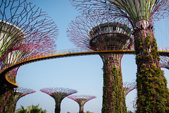 (the.redhead.and.the.wolf) Tags: tower nature architecture garden singapore botanicalgarden marinabay gardensbythebay marinabaysands