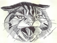 gato a lapicero (ivanutrera) Tags: animal pen cat sketch drawing gato felino draw dibujo lapicero boligrafo minino dibujoalapicero dibujoenboligrafo
