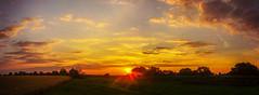 sundown on the elbe land (franzisko hauser) Tags: trees sun field grass sundown bushes elbe