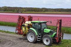 Tractor (cklx) Tags: red holland yellow spring tulips may tulip april brightcolors tulpen noordwijkerhout tulp lisse 2016 bollenstreek hillegom wassergeest
