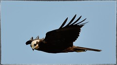 DSC_5488_043 (Gigi Sanna) Tags: sardegna bird eye birds nikon 150 uccelli 600 di campo tele tamron occhio animale uccello stagno d600 allaperto profondit acquatico gigisanna 150600 tamron150600