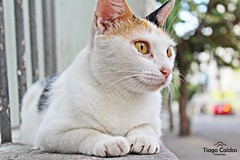 Animais. (tiagocaldas7) Tags: dog pet cats co animal cat canon photography photo day foto photographer gato felino fotografia animais canonphoto instapet