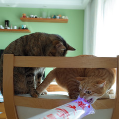 R0080128s (lazybonessss) Tags: cat momo kitten nana ricoh kitten2 ricohgrii