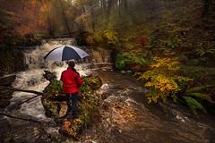 Viviendo el otoño (Marce Alvarez.) Tags: landscape nikon paisaje bosque otoño cantabria cascada ucieda nikkor1635 marcealvarez