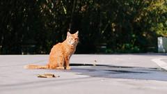 P2081864 (Kyatto) Tags: cat taiwan olympus kit   m43 em10  40150mm