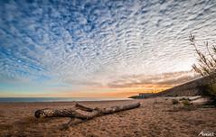 2016-01-17 (Death-Soul) Tags: sunset sea sky plants seascape beach clouds landscape atardecer mar sand nikon plantas playa paisaje arena cielo nubes trunk tronco arenys arenysdemar nikond3300 d3300