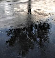 tree reflection on pavement (Jan_ice) Tags: blues wetpavement treereflectiononpavement