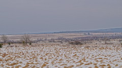 dcor fagnard (Ld\/) Tags: winter nature landscape belgium belgique belgie hiver neige paysage venn hautes fagnes wallonie rgion hohes waimes wallone