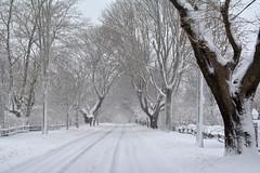 Bridge Lane Bridgehampton 2 (Darren-) Tags: travel sky usa snow ny cold art beautiful beauty america festive landscape fun outdoors island hamptons gorgeous longislandny eastend d5200