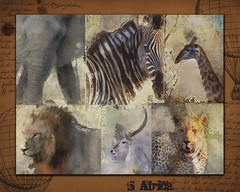 Out of Africa (jimlaskowicz) Tags: africa wild elephant art animals collage southafrica artistic lion safari textures leopard zebra layers giraffe impressionistic typology waterbuck