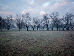 Early morning frost (elkarrde) Tags: morning frost frosty earlymorning december 2015 winter winter2015 sky clouds nature city cityscape zagreb bundek bundeklake croatia location:city=zagreb location:country=croatia panasonic lumix gx7 dmcgx7 panasoniclumixdmcgx7 camera:brand=panasonic camera:mount=microfourthirds camera:format=microfourthirds camera:brand=lumix camera:model=dmcgx7 trees park mist g1425 g14mmf25 14mm panasoniclumixg14mmf25asph lens:brand=panasonic lens:brand=lumix lens:model=g14f25 lens:mount=microfourthirds lens:format=microfourthirds lens:focallength=14mm lens:maxaperture=25 wideangle lens:model=hh014 hh014 twop digital mediumdigital