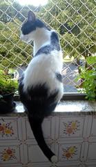 Namastê 01 - DSC02440 (Dona Minúcia) Tags: blackandwhite cute art window animal cat arte gato sentado janela seated fofo pretoebranco gracinha