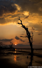 Storm-chaser: Botany Bay (Hale.M) Tags: ocean sun beach nature water sunrise landscape nikon outdoor southcarolina shore botanybay landscapephotography sunrisephotography nikond750