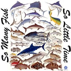 3041-540pxw (tshirtsbycaptntom) Tags: fishing saltwaterfishing oceanfishing captntom