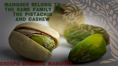 """Mangoes CAshew and Pistachio Family • <a style=""""font-size:0.8em;"""" href=""""http://www.flickr.com/photos/139081453@N03/25112045513/"""" target=""""_blank"""">View on Flickr</a>"""