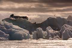Charranes pescando en Jkulsrln (Lou Rouge) Tags: naturaleza ice nature birds iceland islandia fishing laguna glaciar hielo icebergs jkulsrln glacierlagoon icelagoon 2015 glaciallake charranes charranesrticos