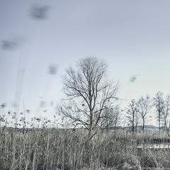 flocons de printemps (photofabulation) Tags: longexposure trees nature reeds switzerland suisse arbres le flakes roseaux flocons vaud romandie poselongue