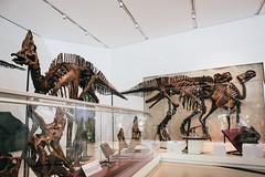 Jurassic Park - Hadrosaurids (Mallika Makkar Photography) Tags: toronto canada history museum canon fossil rebel university dinosaur reptile wideangle science bones bone biology paleo rom palaeontology yyz uoft 18mm fossilized sauropod 416 pterosaur torontophotographer torontophotography