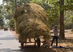 Loads - Photo #16 (doug-craig) Tags: travel people usa nikon asia cambodia stock culture photojournalism korea transportation siemreap journalism loads d700 dougcraigphotography