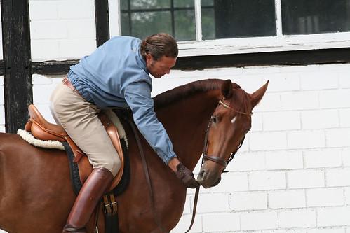 Horses Insight  (4)