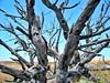 withered wood (dan.boss) Tags: ixus canon canonixus400 españa spain deadwood rural