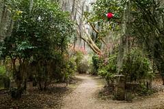 Wonderland (sandrine L.) Tags: leica usa mystery garden louisiana plantation wonderland m9 rosedown saintfrancisville