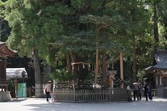DSCF8852 (ababh) Tags: nara  ceder  sacredtree   omiwashrine omiwajinnja